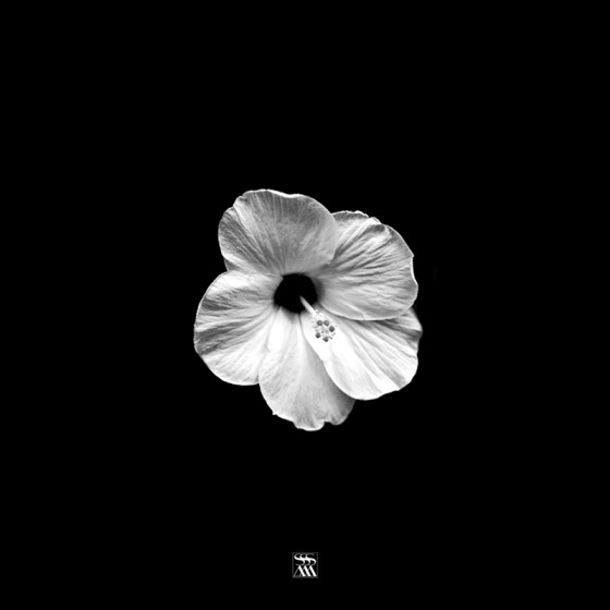 FLOWER SA001
